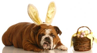 dog dressed as an easter bunny